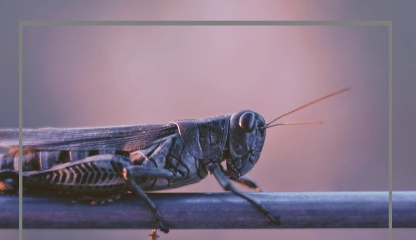 How to Get Rid of Grasshoppers in House